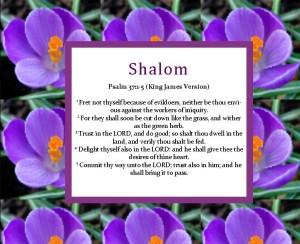 Shalom-365-PS-37