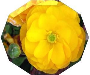 flower10sides03
