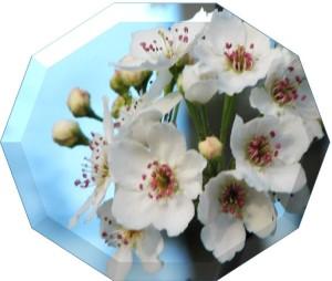 flower10sides04