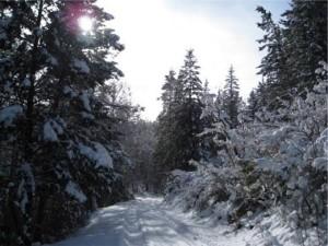 WinterPath02