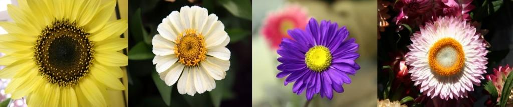 Flowerboarder