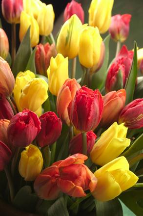 flowers-4-1397446