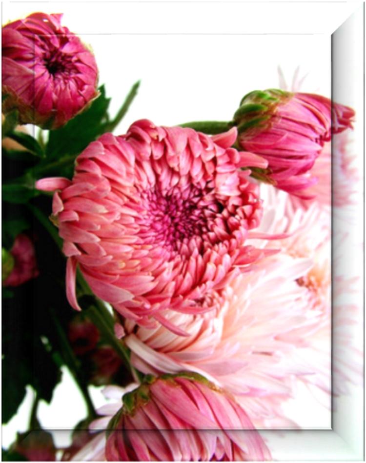 Framedflower